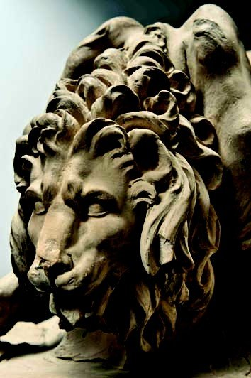 lion_detail.jpg.jpe