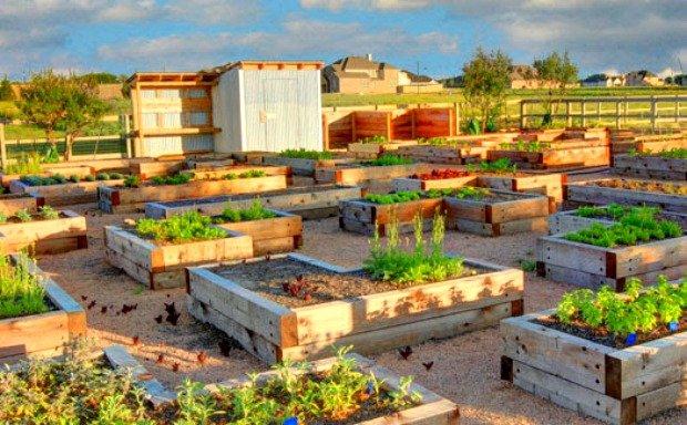 Tassione Farms.jpg.jpe