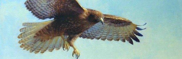 hawk TOP.jpg.jpe