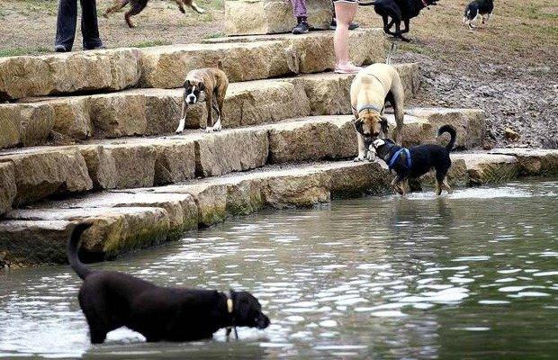 ZBonz Dog Park.jpg.jpe