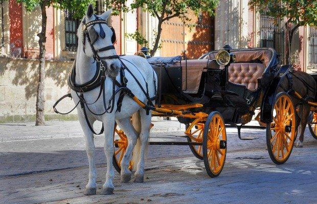 Brazos Carriage Rides.jpg.jpe