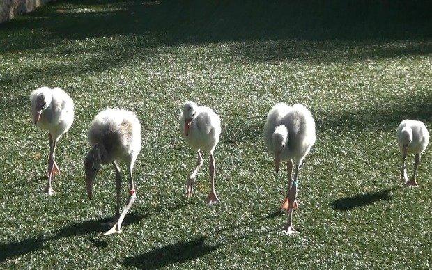 Flamingos.jpg.jpe