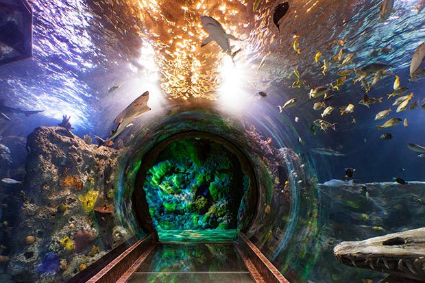 aquarium_fb.jpg.jpe