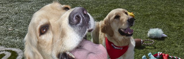 Up Close Cook Children's Dogs_620x200.jpg.jpe