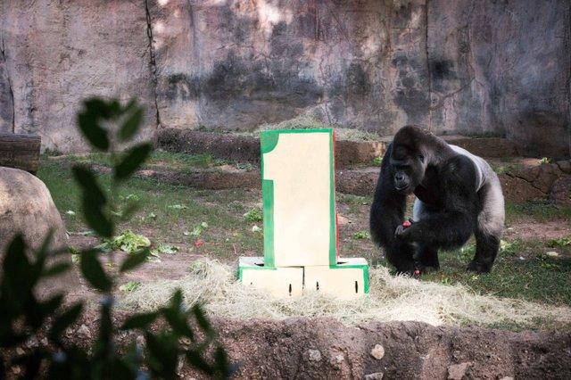 #1 Gorilla 3.jpg