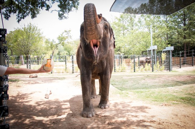 Elephant #1-1.jpg