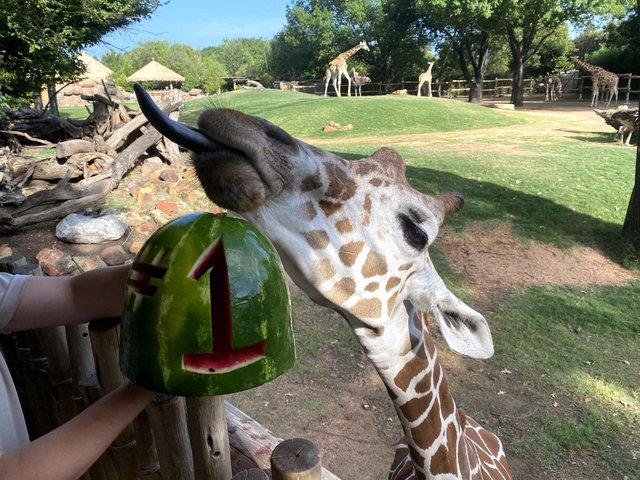 giraffe #1.jpg