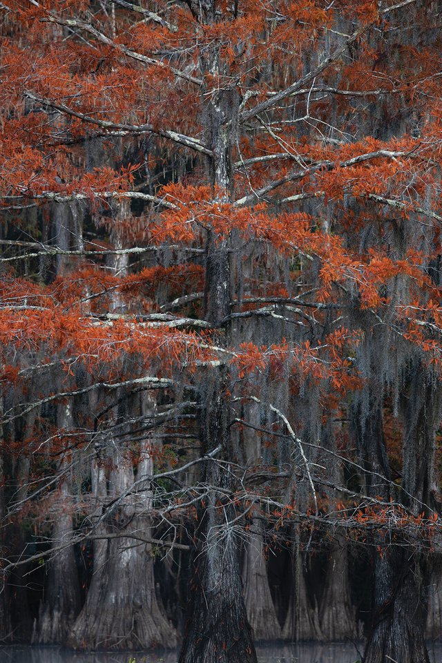 Caddo Lake1.jpg