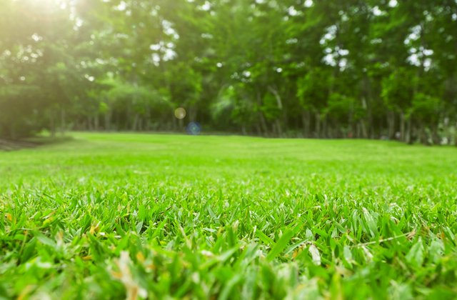 Close up green grass field with tree blur park background,Spring and summer concept