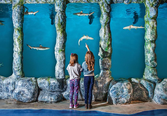 Blue Zoo (1).jpg