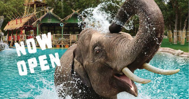 Elephant Springs is now open!