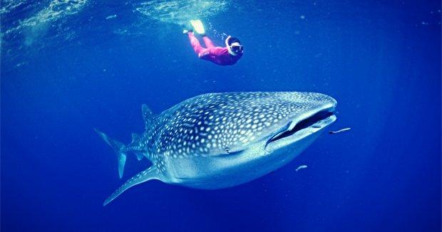 Whale.jpg.jpe