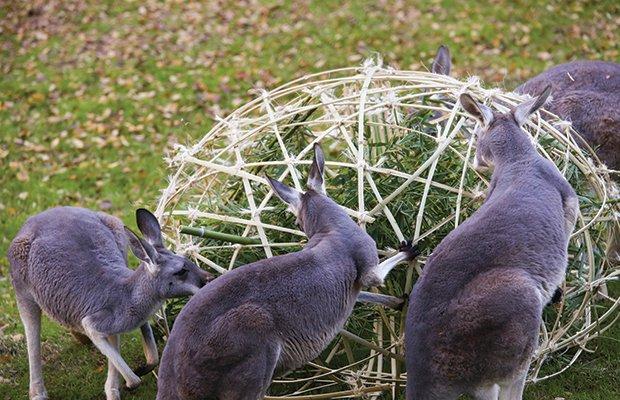 Zoo-15.jpg.jpe