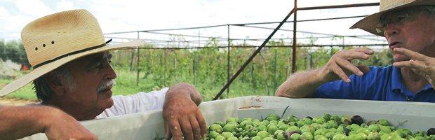 oliveoilbanner.jpg.jpe