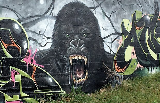 GorillaWall(1).jpg.jpe