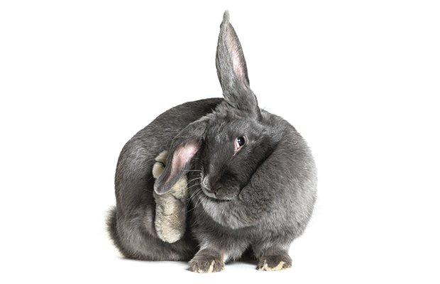 bunny_3.jpg.jpe