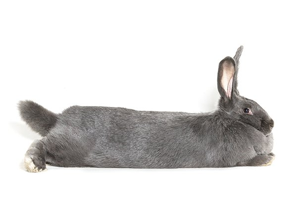 bunny_4.jpg.jpe