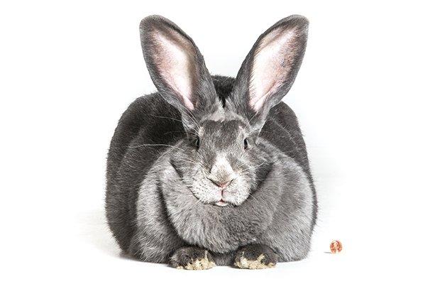 bunny_main.jpg.jpe