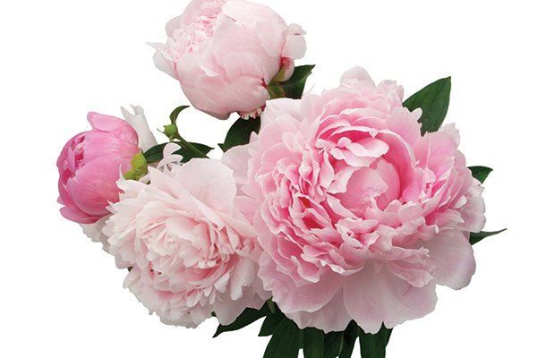 flowers.jpg.jpe