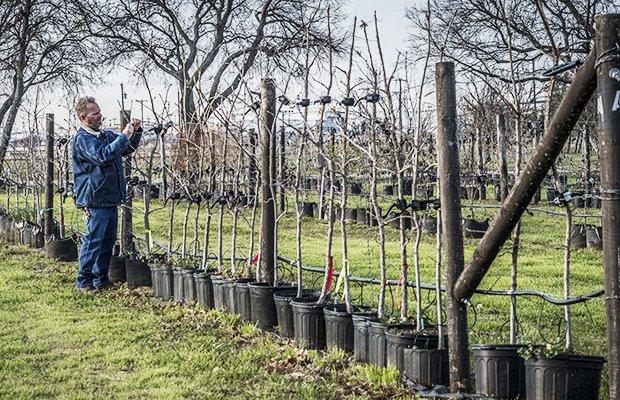 Fort Worth Tree Farm-25.jpg.jpe