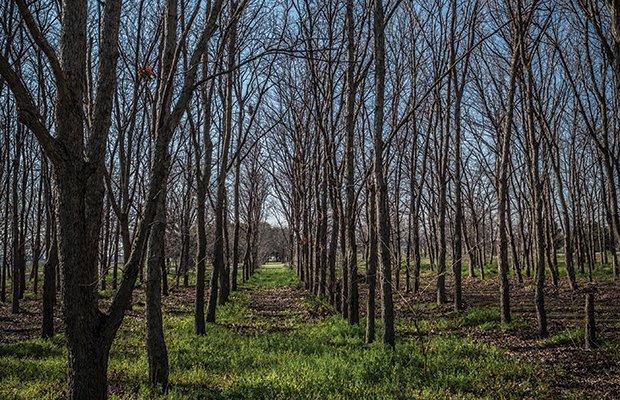 Fort Worth Tree Farm-85.jpg.jpe