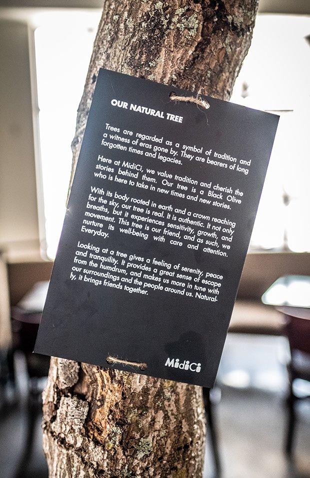 tree(2).jpg.jpe