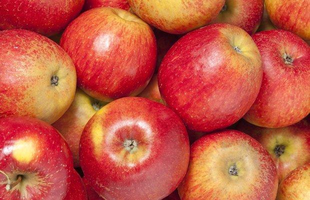 Apples(1).jpg.jpe