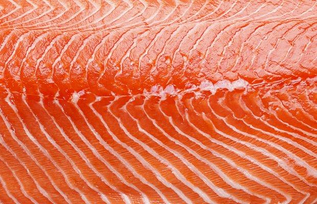Salmon.jpg.jpe