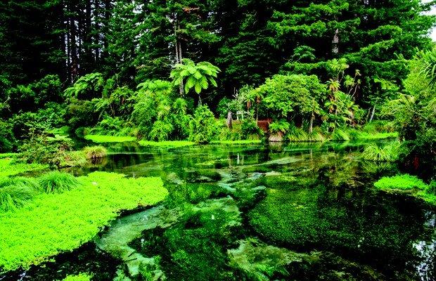 Hamurana Springs.jpg.jpe