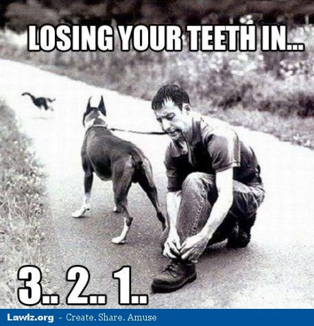losing-your-teeth-in-3-2-1-dog-man-tying-shoes-meme.jpg.jpe