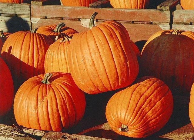Pumpkin Spice.jpg.jpe